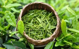 Китайский зеленый чай иногда вызывает острое воспаление печени