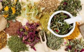 Травы при онкологических заболеваниях