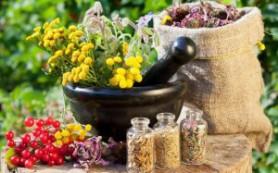 Как очистить печень травяными сборами
