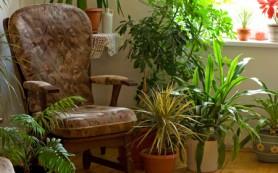 Домашние растения: источник здоровья
