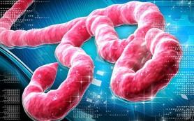 Российскую вакцину против вируса Эбола начнут испытывать в Гвинее осенью