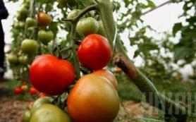 Медики: томаты и арбузы улучшают качество сосудов