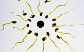Ученые: газировка снижает количество сперматозоидов у мужчин