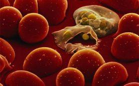 С малярией станут бороться по-новому