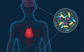 Болезнь Паркинсона связали с изменениями в микробиоме кишечника