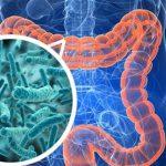 Микробы в кишечнике помогут сбросить вес