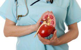 Здоровые почки: правила, о которых надо знать
