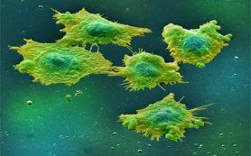 Раковые клетки метастазируют с бактериями