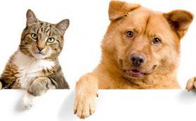Если кошек и собак кусают насекомые