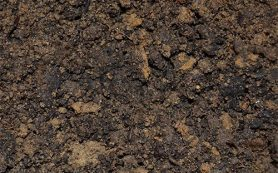 Ученые исследуют новое лекарство от ожирения, полученное из грязи