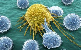 Созданы клетки, уничтожающие рак