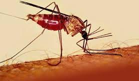 Малярия: клиническая диагностика, химиотерапия и профилактика