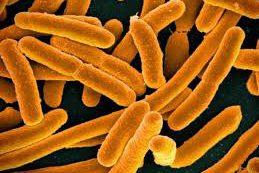 В кишечной палочке обнаружили ген устойчивости к антибиотикам