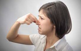 Кора магнолии борется с запахом изо рта