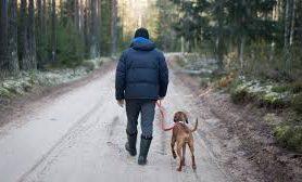 Собаки помогают людям двигаться