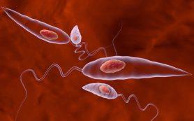 Ученые обнаружили у возбудителей лейшманиоза уязвимость