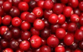 Медики назвали ягоду, избавляющую от зубной боли