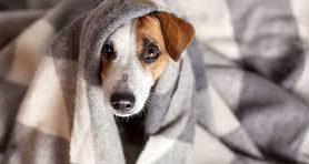 Идеальное здоровье обеспечит… собака