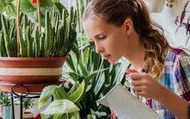 Вот почему комнатные растения не могут очистить воздух в квартире