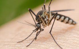 Крем для лечения рака кожи предотвращает болезни, передающиеся комарами
