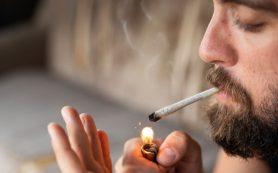 Курение марихуаны может превратиться из привычки в сильную зависимость