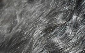 Седым волосам может вернуться прежний цвет, если пройдет стресс