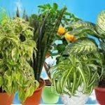 Аллергия, ожог, проблемы с дыханием: какие комнатные растения могут нас убить?
