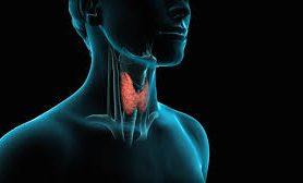 В чем разница между гипо- и гипертиреозом? Разбираемся в болезнях щитовидки