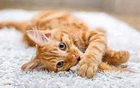 Как выжить с кошкой, если вы аллергик? 5 советов, которые спасут вас обеих