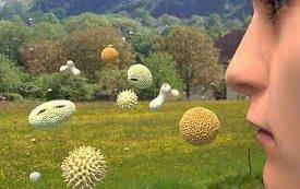 Как пережить период цветения, если у вас поллиноз